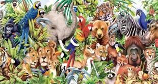 animal-group